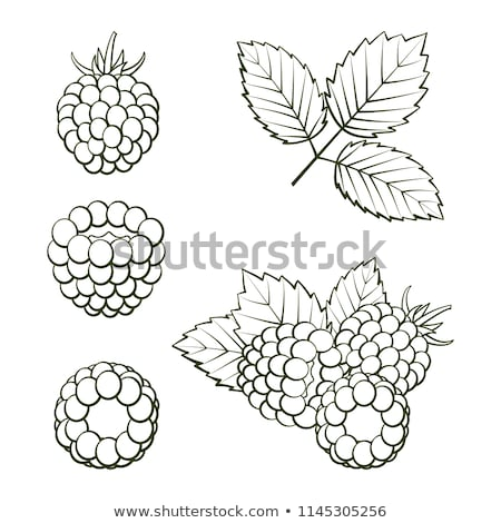 pair of raspberry with leaf Stock photo © Mikko