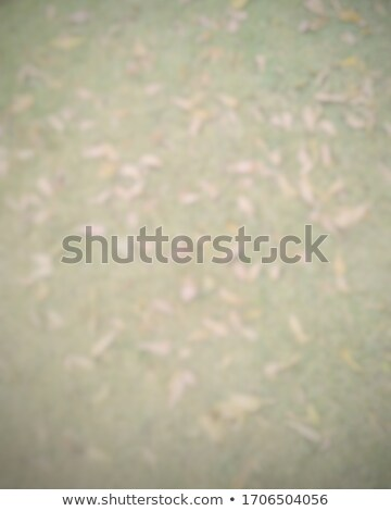 ストックフォト: 画像 · 緑の葉 · 抽象的な · ぼやけた · ツリー · 春