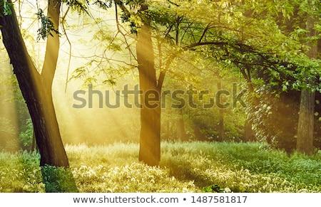Természet remény szimbólum növekedés fejlesztés elöl Stock fotó © Lightsource