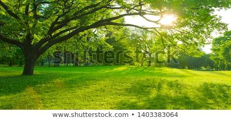 красивой пейзаж зеленый газона деревья парка Сток-фото © feelphotoart