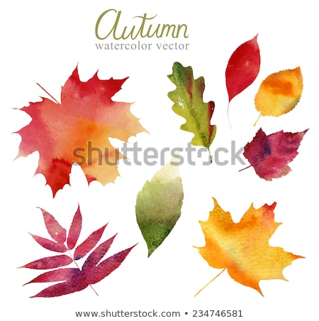 Green watercolor painted vector autumn maple leaf background Stock photo © gladiolus