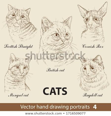 ヴィンテージ 猫 シルエット フロント 表示 図示した ストックフォト © Soleil