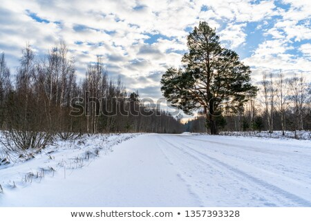 Winter landscape road snow covered fields windmills Stock photo © fotoaloja