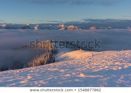 Winter landscape view fields forests covered snow fog Stock photo © fotoaloja