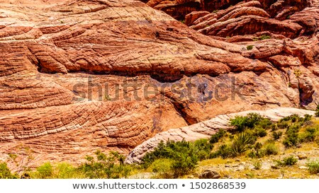 red rock canyon flora nevada stock photo © rigucci