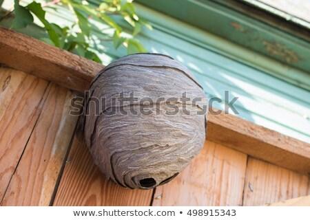 empty wasp nest Stock photo © PixelsAway