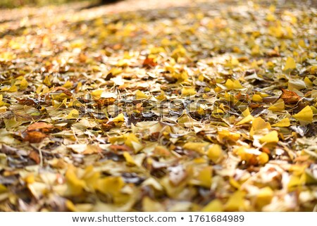 Stock photo: Autumnal Rhapsody