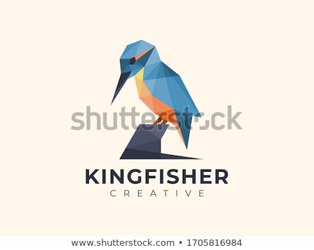 Logotipo exótico pássaro negócio belo martim-pescador Foto stock © shawlinmohd