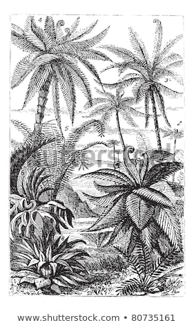 Arborescent Ferns, vintage engraved illustration Stock photo © Morphart