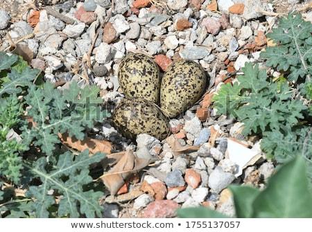 Stock photo: Birds On Stones Spring Sign