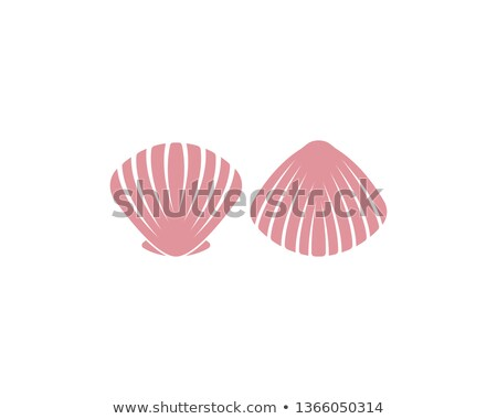 three seashells on white stock photo © bsani