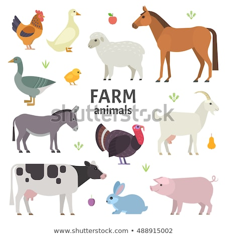 Stock photo: Domestic farm animals flat vector icons