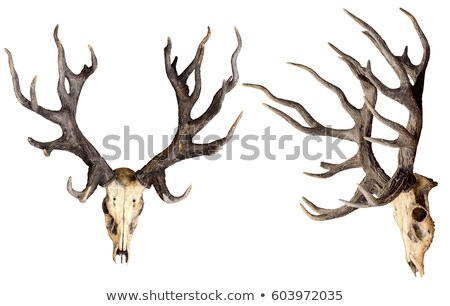 deer head close up stock photo © oleksandro