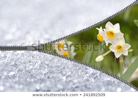 snow reveal Stock photo © nicemonkey