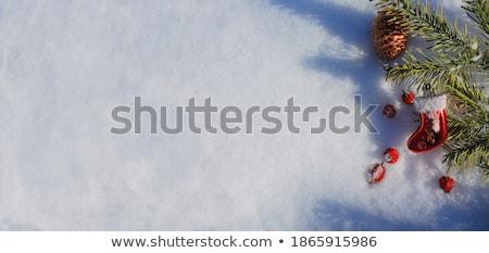 Zimą śniegu odznaczony wzrosła biodro jagody Zdjęcia stock © szabiphotography