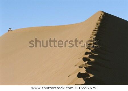 二人 ライディング ラクダ 砂漠 女性 砂 ストックフォト © monkey_business