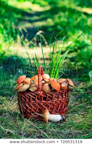 champignon · groot · bos · blad · achtergrond - stockfoto © nobilior