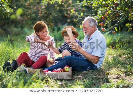 Woman in orchard eating apple Stock photo © IS2
