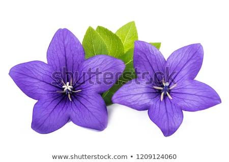 çiçekler · mavi · saksı · güzellik · buket · dekorasyon - stok fotoğraf © gsermek