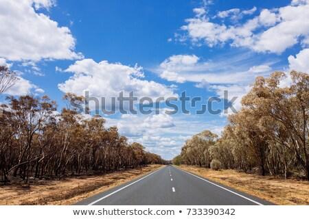 夏場 · オープン · 道路 · ニューサウスウェールズ州 · オーストラリア · 夏 - ストックフォト © stephkindermann