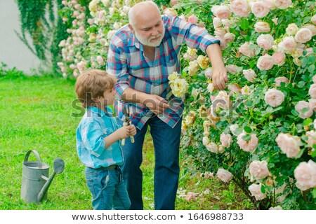 Großvater Enkel Pflanzung Bildung Unterstützung Landwirtschaft Stock foto © IS2
