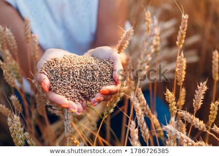 Mujer campo de trigo diversión sonriendo medio ambiente jugando Foto stock © IS2