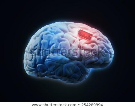 Implantaat digitale hersenen toekomst hoofd Stockfoto © unikpix