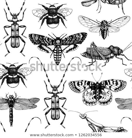 Bogár rovar végtelen minta illusztráció absztrakt terv Stock fotó © bluering