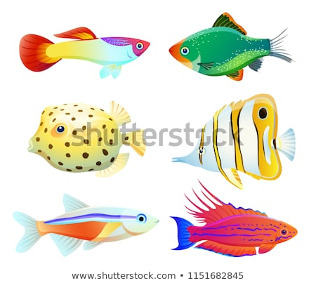 Boxfish and Green Tiger Barb Vector Illustration Stock photo © robuart