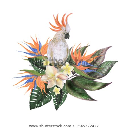 Parrot White Cockatoo with Colorful Hibiscus Flowers Blossom and Tropical Leaves Stock photo © smeagorl