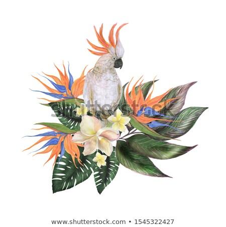 güzel · renkli · ebegümeci · çiçekler · çiçek · tropikal - stok fotoğraf © smeagorl