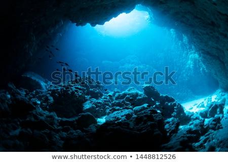 Jaskini ocean ilustracja widoku domu drzewo Zdjęcia stock © colematt
