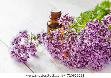 a bottle of oregano essential oil with fresh blooming oregano twigs stock photo © madeleine_steinbach