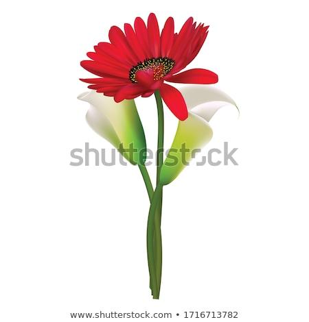赤 · 花 · 画像 · 春 · 自然 · デザイン - ストックフォト © dashadima