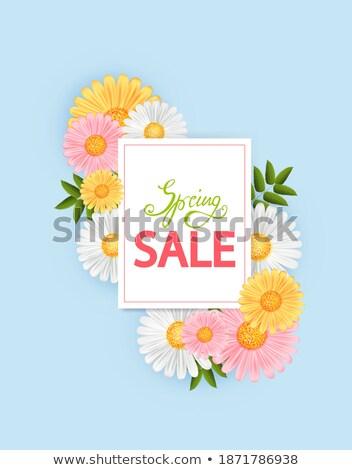 сайт желтый Ромашки весны продажи вектора Сток-фото © robuart