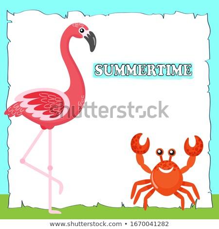 летнее время плакат текста розовый фламинго краба Сток-фото © robuart