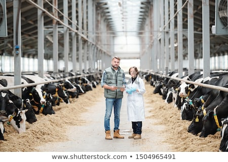 Two confident workers of large contemporary dairy farm standing on long aisle Stock photo © pressmaster