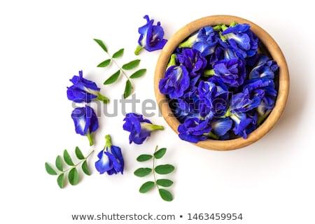 Kék lila tea pillangó üveg háttér Stock fotó © furmanphoto