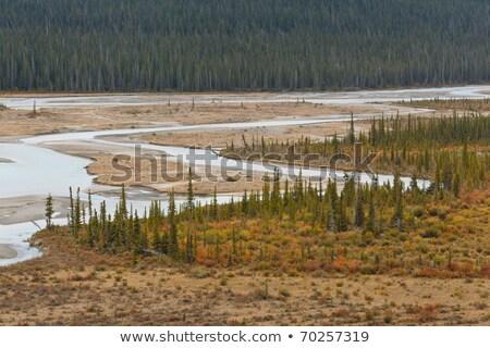 ősz · kilátás · Saskatchewan · font · tó · kutya - stock fotó © broker