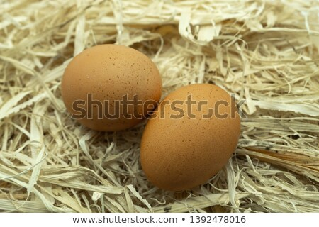 Two Eggs on Straw Bedding Stock photo © azamshah72