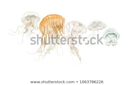 赤 · 白 · クラゲ · 水 · 魚 · 海 - ストックフォト © Laracca
