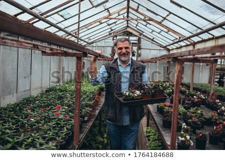 Faiskola üvegház nagy cserje tavasz étel Stock fotó © franky242