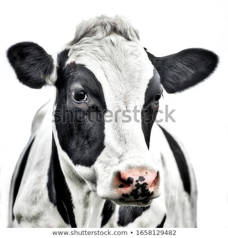 Vaca retrato francés alpes hierba sol Foto stock © chrisroll