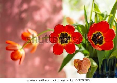 Rouge luxe propre velours fermé Photo stock © urbanangel