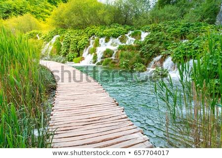 Cachoeira floresta árvores verão azul viajar Foto stock © samsem