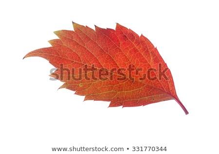 Bladeren shot smerig grond textuur Stockfoto © get4net