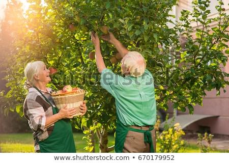 Pár gyűlés almák kert nő fa Stock fotó © photography33