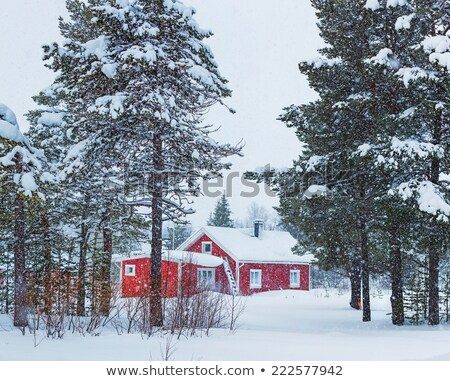 snow covered birch tree and a red barn stock photo © donland
