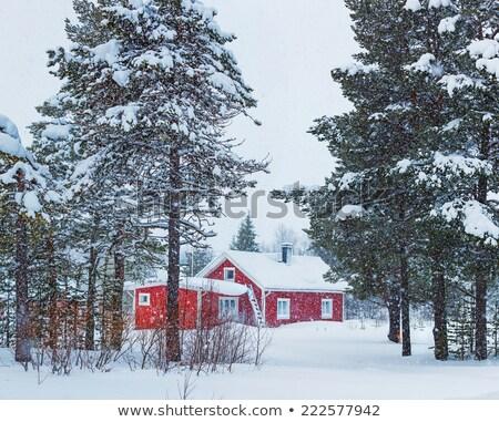 sneeuw · gedekt · berk · boom · Rood · schuur - stockfoto © DonLand