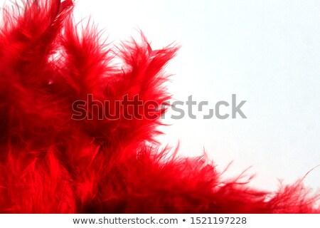 Piros fotó fehér textúra absztrakt természet Stock fotó © Marfot